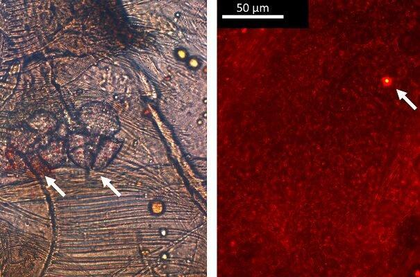 شناسایی سخت پوستی که پلاستیک را به نانو پلاستیک تبدیل می کند